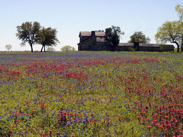 LANDSCAPE WILDFLOWERS - WILD FLOWERS